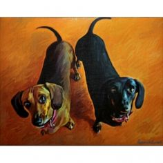 59 Best Doxens Images Dachshund Dog Little Puppies Puppys