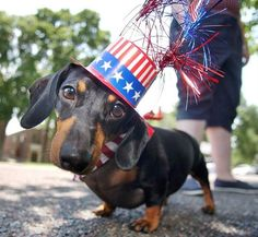 Kandi is all dressed up for the Fourth of July.
