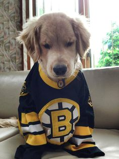 Ok I'm not a Bruins fan, but holy hell is this adorable.