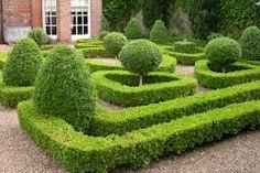 formal box hedge planting - Google Search