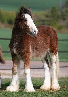 Eric I have discussed numerous times about having horses- He said they must be Clydesdales. Childhood dreams coming true Big Horses, Work Horses, Horse Love, Black Horses, Funny Horses, All The Pretty Horses, Beautiful Horses, Animals Beautiful, Cute Animals