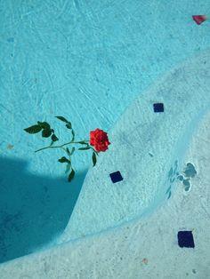 pool - red rose