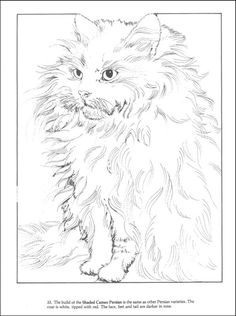 Cats Coloring Book (000441) Details - Rainbow Resource Center, Inc.