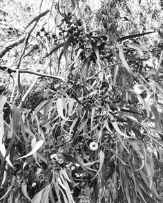 Today's...Morning walk #2502a #naturephotography #plant #blackandwhitephotography #monochrome
