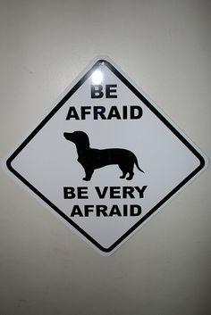 Obey the #dachshund #doxie #WeinerDog #dog