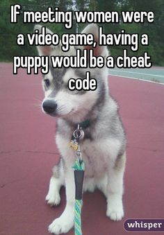 If meeting women were a video game, having a puppy would be a cheat code