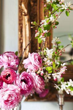 Spring blooms inside