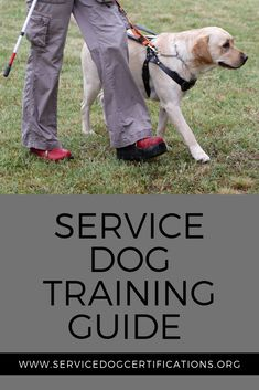 Learn about service dog training basics with this helpful guide! Therapy Dog Training, Service Dog Training, Training Your Puppy, Therapy Dogs, Autism Service Dogs, Psychiatric Service Dog, Support Dog, Guide Dog, Dog Care