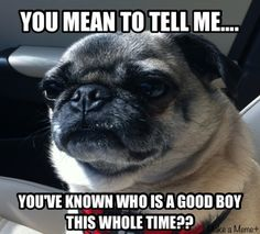 HA!  I'm so guilty of saying this...maybe I'm trying to make my Rocco a good dog! @Vicki Pearson