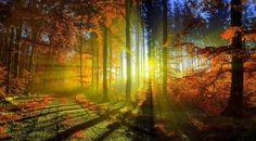 fondos de pantalla de otoño y hojas