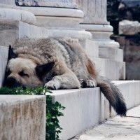 Athens, Greece by Olga Larkina Photography www.olgalarkina.com Athens Greece, Dogs, Photography, Animals, Photograph, Animales, Animaux, Pet Dogs, Fotografie