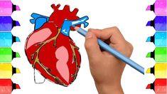 11 Best Human Heart Diagram Images Human Heart Diagram Cardiac