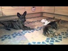 Kimmy und Jenny spielen Ball Dogs, Youtube, Animals, Animaux, Doggies, Animal, Animales, Pet Dogs, Youtubers