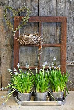 Lindos suportes inusitados para as flores e plantas!!!