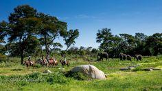 Horses & Elees - Horseback safari in Zimbabwe