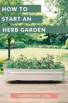 How to Start an Herb Garden • Gardenary Small Herb Gardens, Back Gardens, Outdoor Gardens, Back Garden Landscape Design, Herb Garden Design, Landscape Designs, Spice Garden, Herb Garden In Kitchen, Herbs Garden