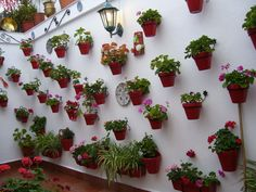 patio Málaga Andalucía