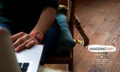 Fotografía   Waggingtale Films