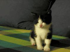 猫画像の画像60枚目!