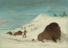 Buffalo Lancing In The Snow Drifts Sioux by George Catlin | Art Posters & Prints