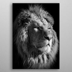 black lion king poster Poster made out of metal. black lion king poster , wild black and white lion face , lion head photos , lions print poster Black And White Lion, Black And White Aesthetic, Lion Photography, Photography Camera, Poster Poster, Print Poster, Spine Tattoo Placements, Lion King Poster, Lions Photos