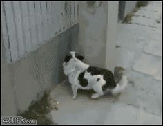 Best .GIF you will see today