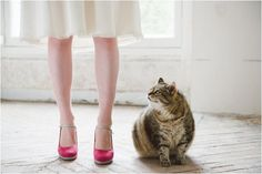 Wedding cat | Image by Déclic & des Flashs