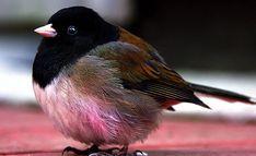 Las aves más gordas del planeta (15 Fotos) | Curiosidades
