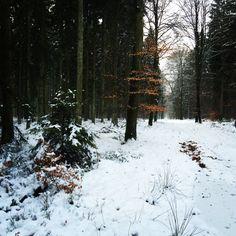 Ardennes Hautes Fagnes Belgium