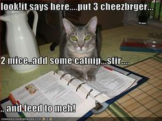 Look! It says here...put 3 cheezbrger...2 mice...add some catnip...stir...and feed to meh!
