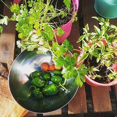 #growyourown #bio #eatyourveggies #eathealthy #lifestyle