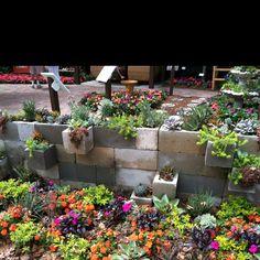 Succulent garden in Epcot with cinder blocks!
