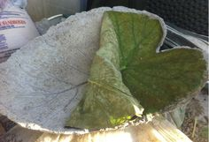 Organic Kitchen Gardening By Maitri Mehta Product Concrete Leaves, Concrete Stone, Concrete Casting, Outside House Decor, Diy Pest Control, Outdoor Projects, Outdoor Ideas, Diy Projects, Outdoor Decor