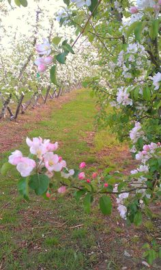 An apple (or pecan) orchard would also be lovely.