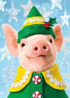 Merry Little Christmas, pig elf