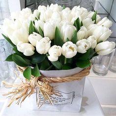 White Tulips, Tulips Flowers, Flowers Nature, Spring Flowers, White Flowers, Beautiful Flowers, Tulpen Arrangements, Floral Arrangements, Flower Box Gift