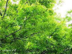 奈良 新緑 - Google 検索