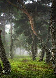 enveloped in mist - by Tiger Seo Tree Mushrooms, Beautiful Forest, Natural Scenery, Closer To Nature, Art Plastique, Landscape Photographers, Wonderful Images, Land Scape, Art Pictures