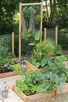 Le potager gourmand botanic love this idea for the for Jardin malin
