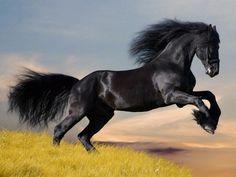 die schönsten pferdebilder der welt | oder das crispy bestes pony der welt 3