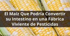 La propagación de los alimentos transgénicos como el maíz Bt ha creado una avalancha de superinsectos; que son resistentes a los pesticidas. http://articulos.mercola.com/sitios/articulos/archivo/2016/09/06/cultivos-geneticamente-modificados-insectos.aspx