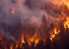 California fire delivers one of the most ferocious fire tornados the US has ever seen (video) Tornados, Wildland Firefighter, California Wildfires, California History, Forest Service, Park Service, Air Purifier, Natural Disasters, South Wales