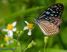P201410-09 Close Up, Insects, Images, Nature, Animals, Naturaleza, Animales, Animaux, Animal