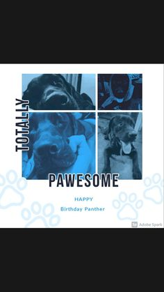 Black Labrador Dog, Panther, Happy Birthday, Dogs, Movie Posters, Fictional Characters, Accessories, Happy Brithday, Panthers