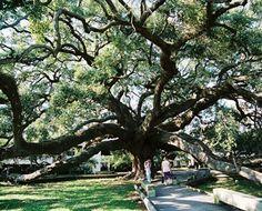 Treaty Oak, Jacksonville, FL