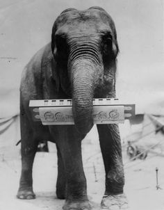 Strange and Funny Vintage Photos of Animals Acting As Intelligent As Humans