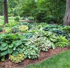 hosta garden patio ideas