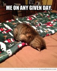 Funny memes – [Me on any given day]