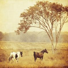Horses on the ranch..