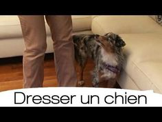 ▶ Comment dresser au pied son chien ? - YouTube